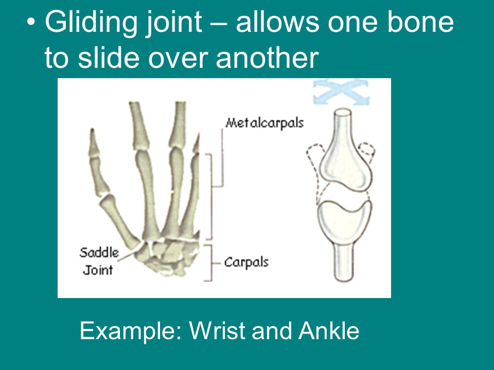 Gliding joint – allows one bone to slide over another
