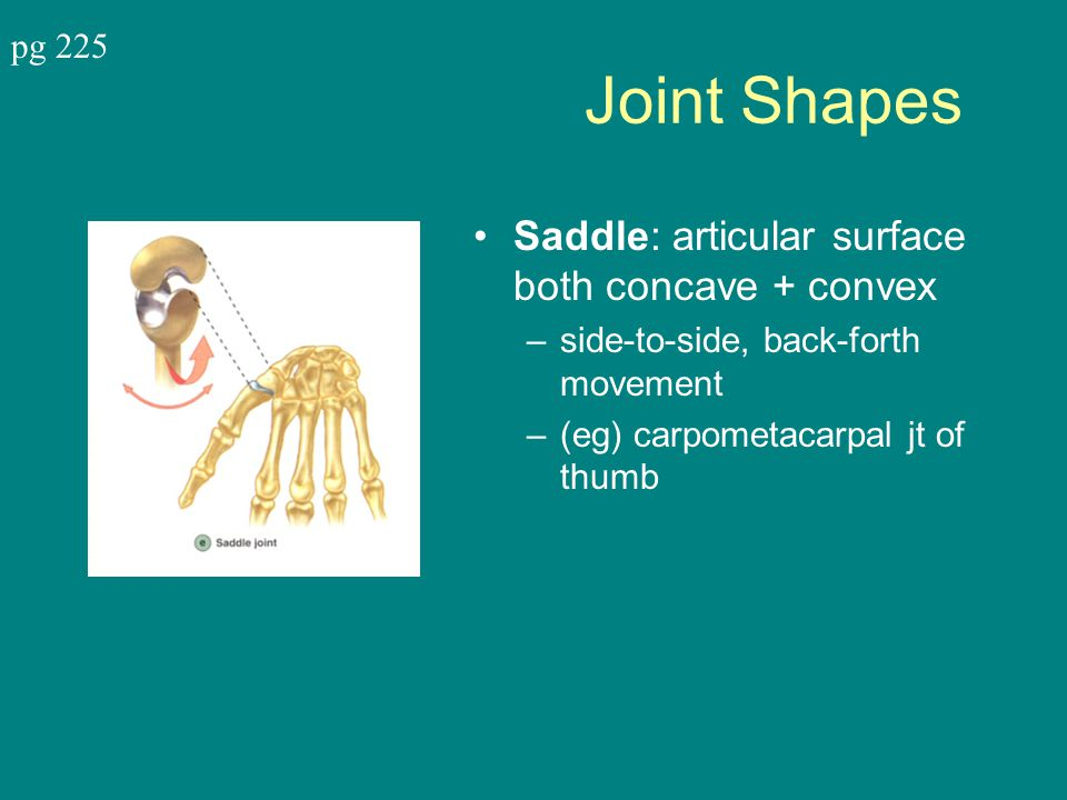 Joint Shapes Saddle: articular surface both concave + convex pg 225