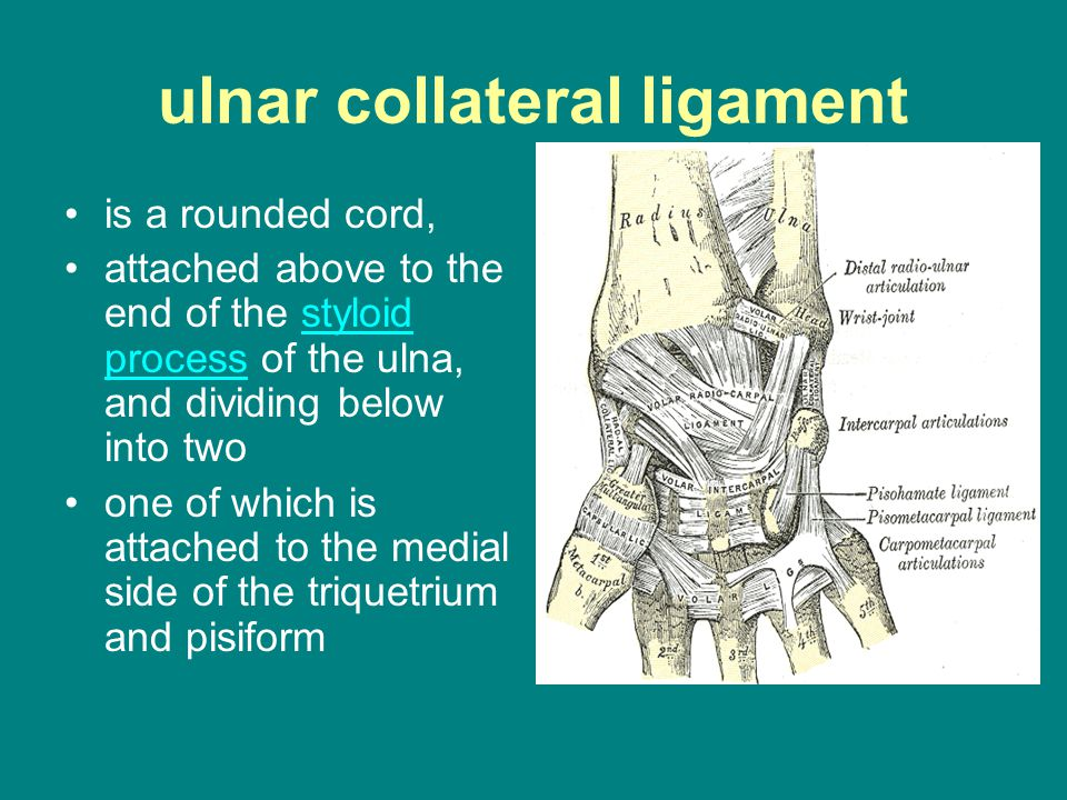 ulnar collateral ligament