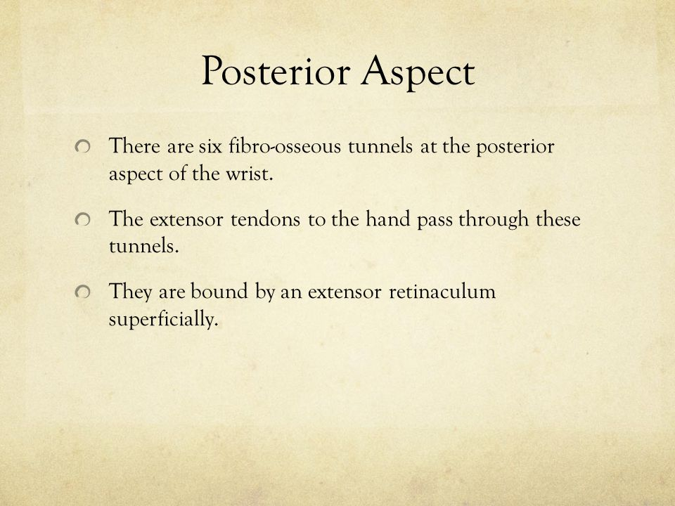 Posterior Aspect There are six fibro-osseous tunnels at the posterior aspect of the wrist.