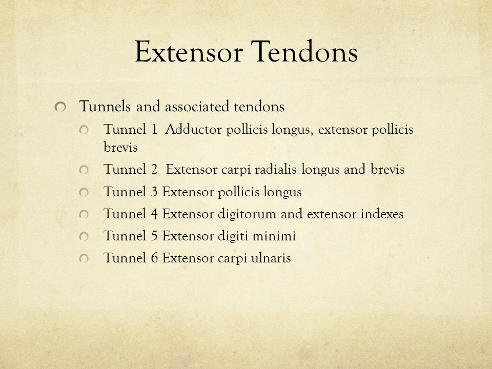 Extensor Tendons Tunnels and associated tendons