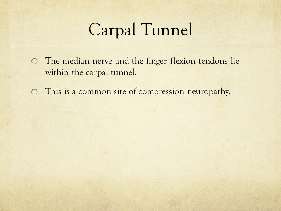 Carpal Tunnel The median nerve and the finger flexion tendons lie within the carpal tunnel.