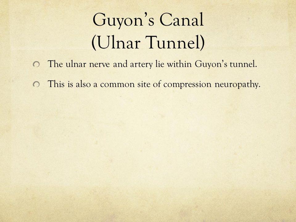 Guyon's Canal (Ulnar Tunnel)