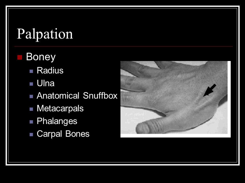Palpation Boney Radius Ulna Anatomical Snuffbox Metacarpals Phalanges