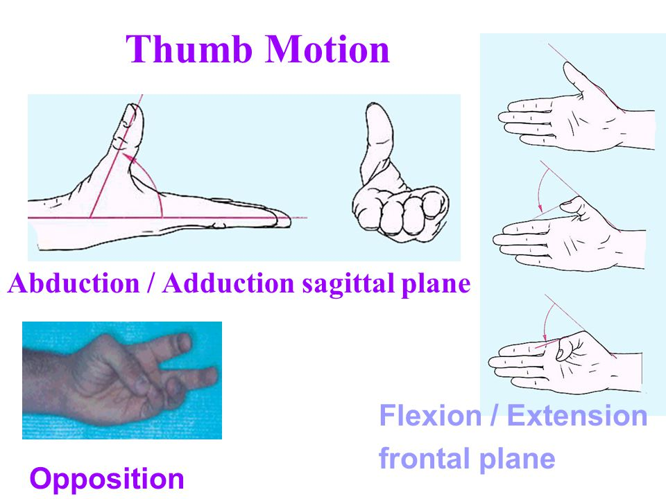 Thumb Motion Abduction / Adduction sagittal plane Flexion / Extension