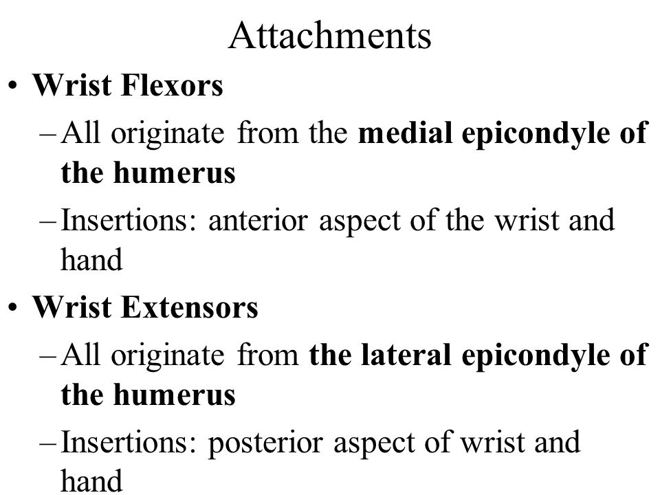 Attachments Wrist Flexors