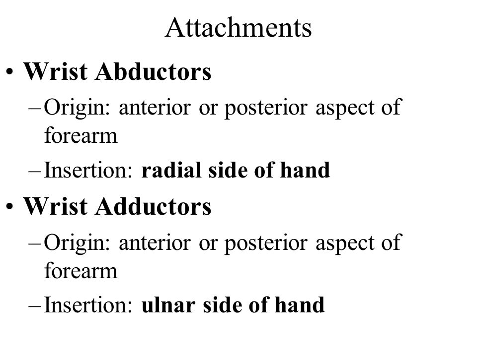 Attachments Wrist Abductors Wrist Adductors