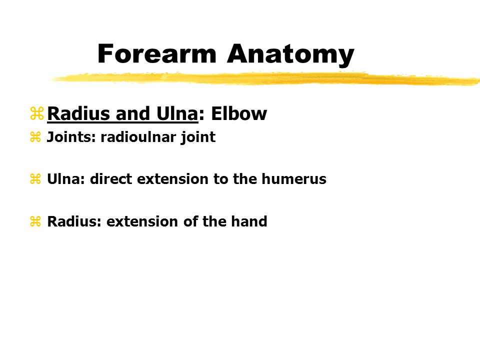 Forearm Anatomy Radius and Ulna: Elbow Joints: radioulnar joint