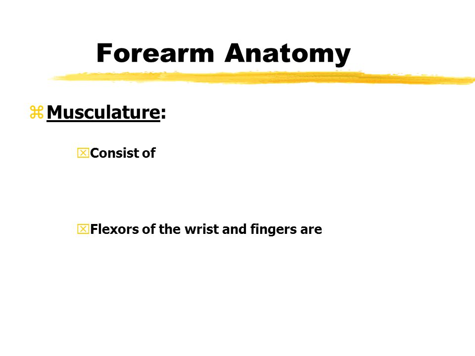 Forearm Anatomy Musculature: Consist of