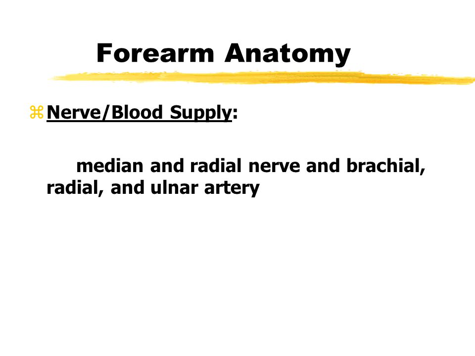 Forearm Anatomy Nerve/Blood Supply: