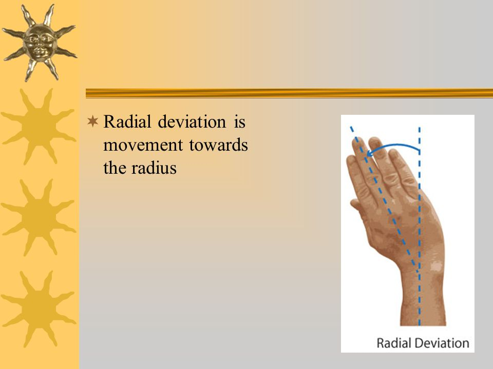 Radial deviation is movement towards the radius