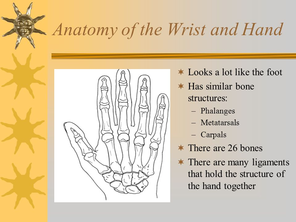 Anatomy of the Wrist and Hand