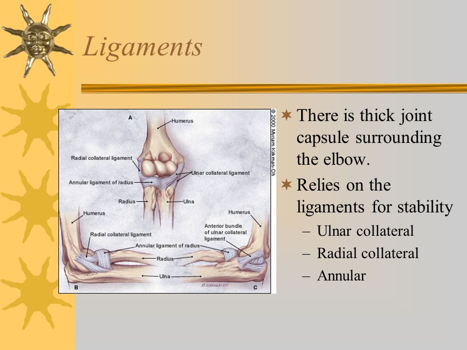 Ligaments There is thick joint capsule surrounding the elbow.