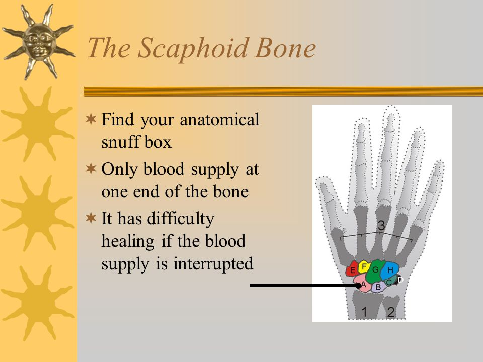 The Scaphoid Bone Find your anatomical snuff box