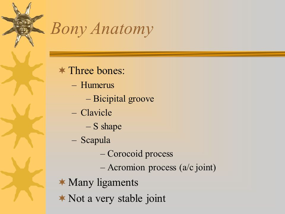 Bony Anatomy Three bones: Many ligaments Not a very stable joint