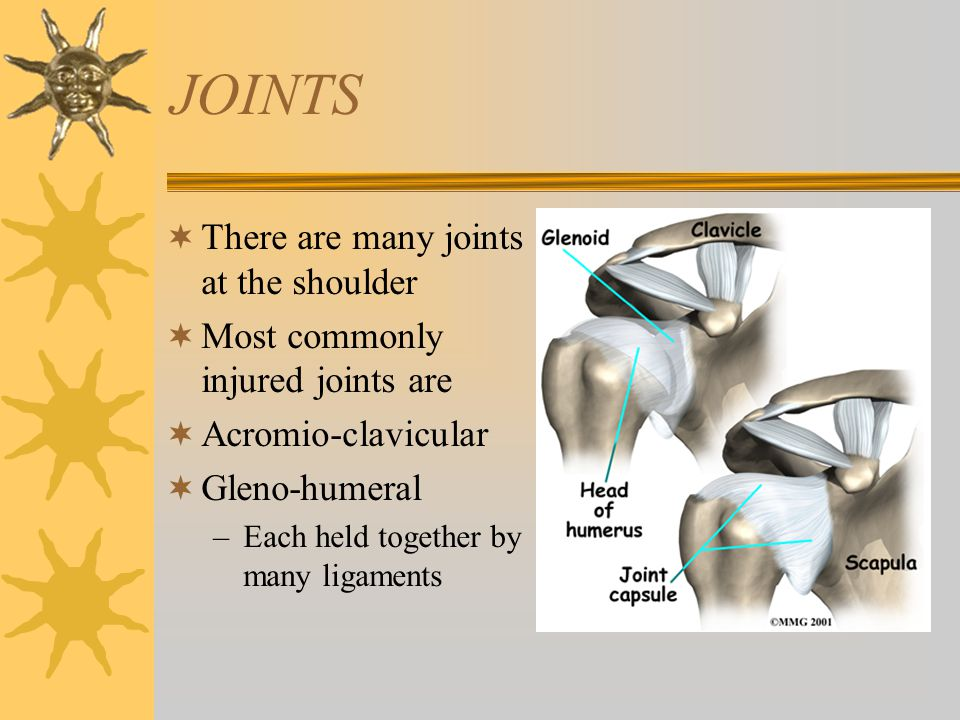 JOINTS There are many joints at the shoulder