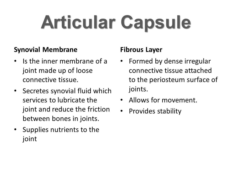 Articular Capsule Synovial Membrane Fibrous Layer