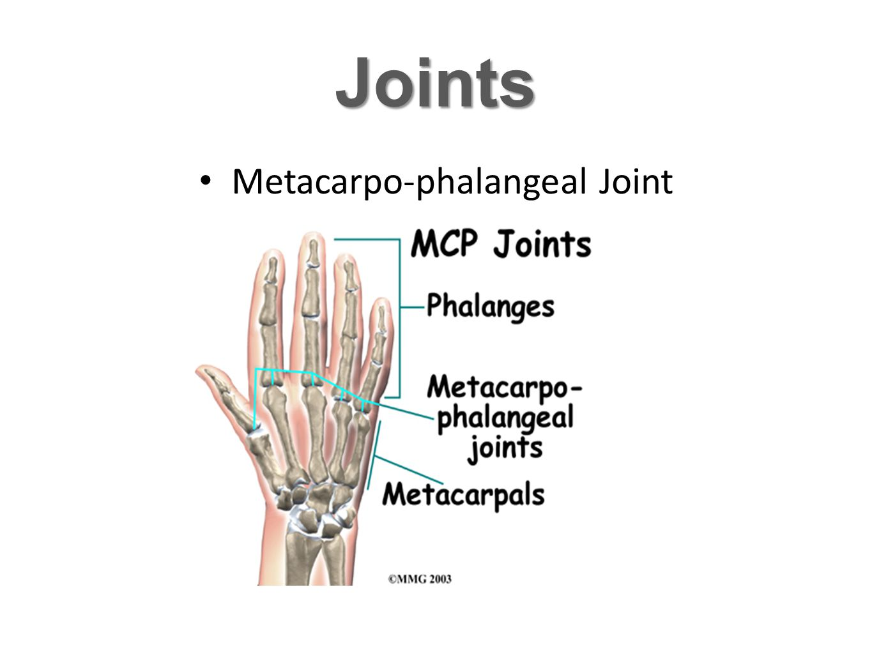 Metacarpo-phalangeal Joint