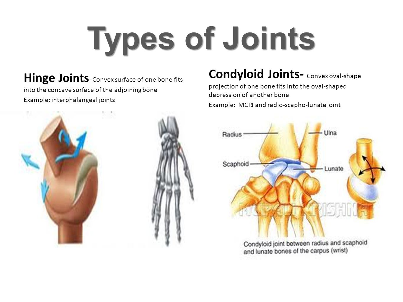 Types of Joints Hinge Joints- Convex surface of one bone fits into the concave surface of the adjoining bone.