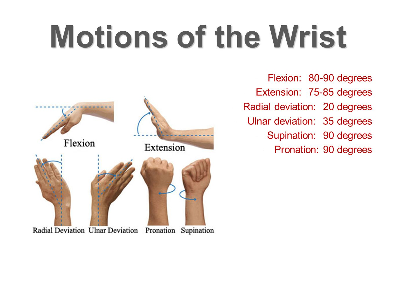 Motions of the Wrist Flexion: 80-90 degrees Extension: 75-85 degrees