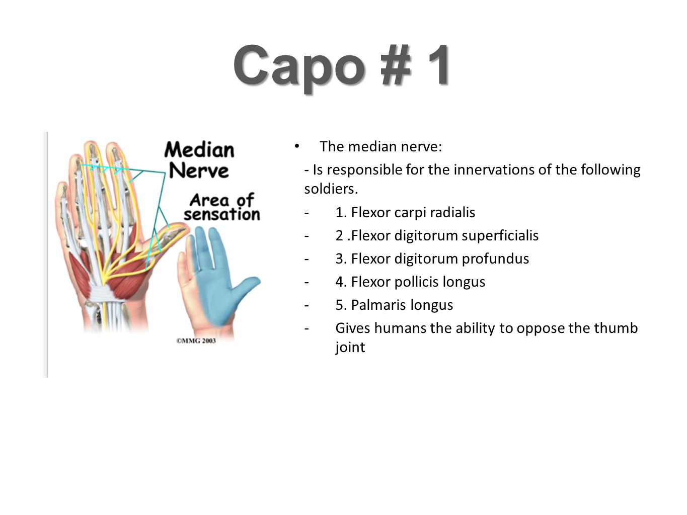 Capo # 1 The median nerve: