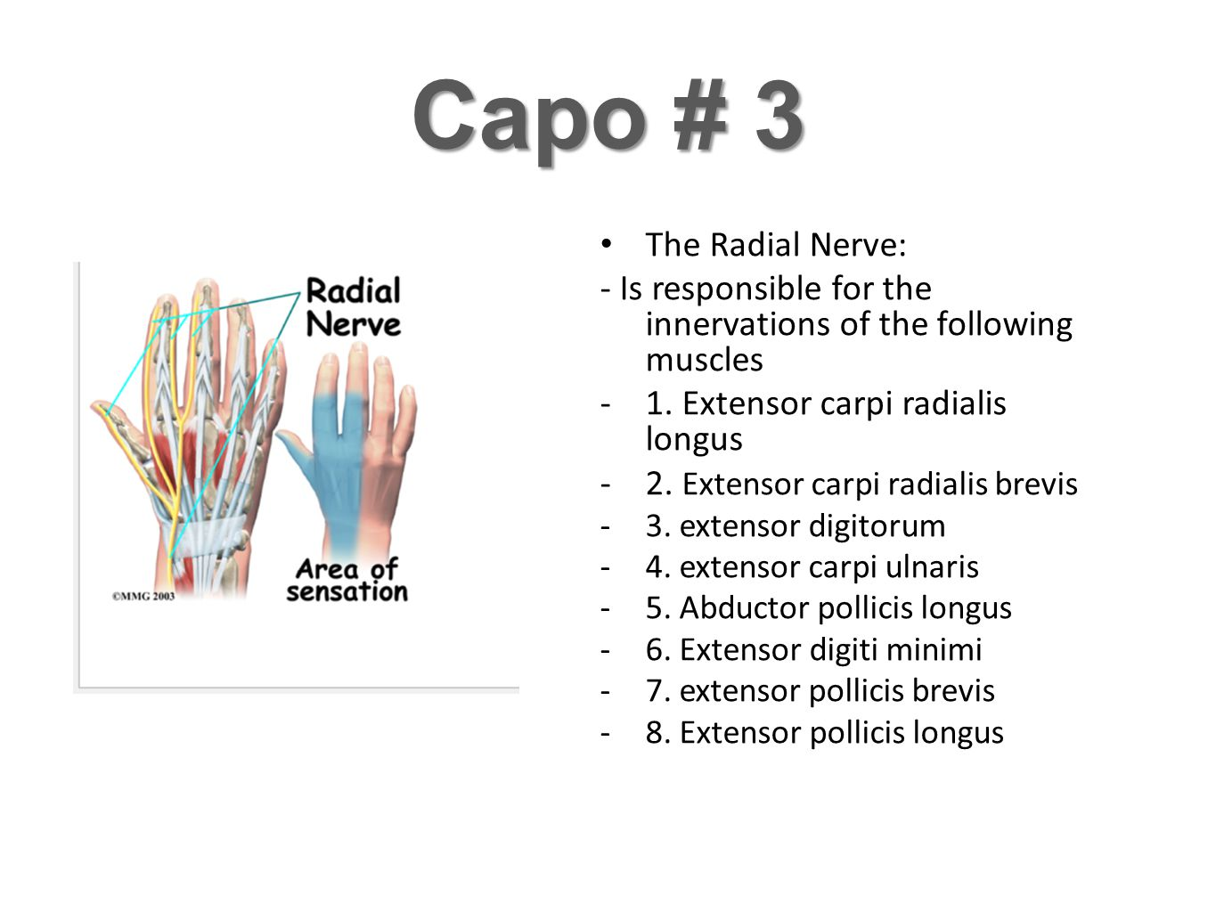 Capo # 3 The Radial Nerve: