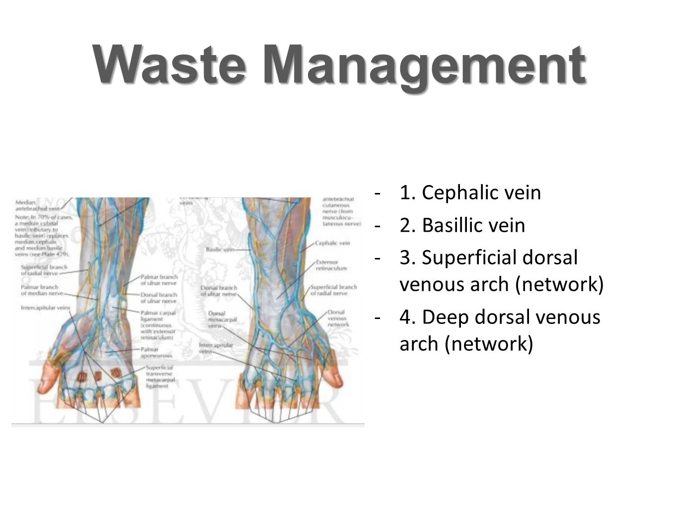 Waste Management 1. Cephalic vein 2. Basillic vein