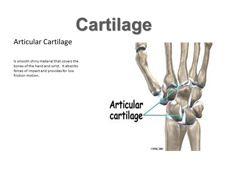 Cartilage Articular Cartilage