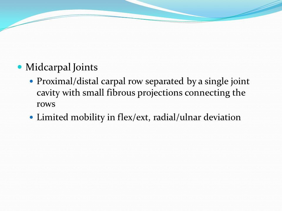 Midcarpal Joints Proximal/distal carpal row separated by a single joint cavity with small fibrous projections connecting the rows.