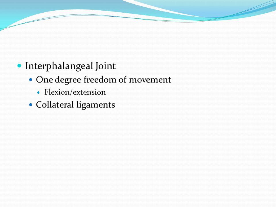 Interphalangeal Joint