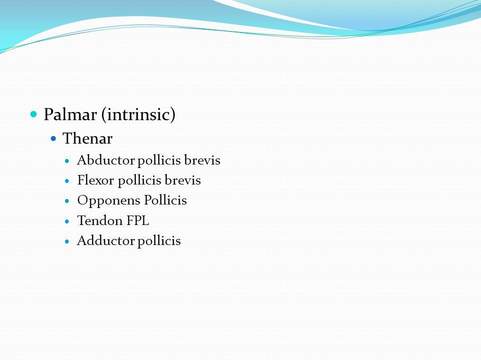 Palmar (intrinsic) Thenar Abductor pollicis brevis
