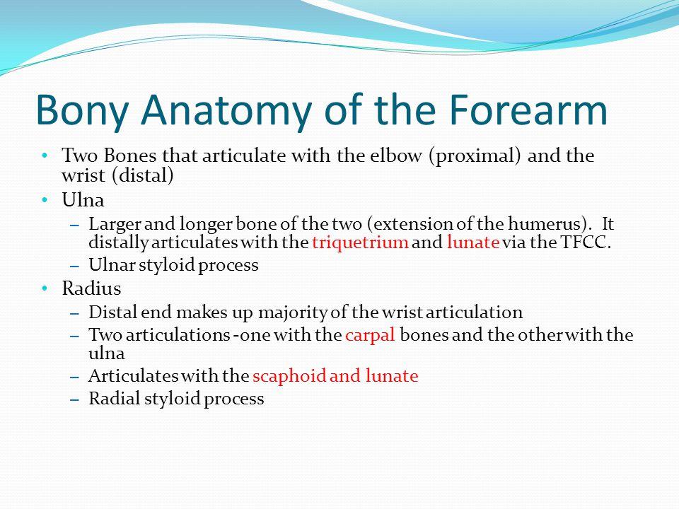 Bony Anatomy of the Forearm