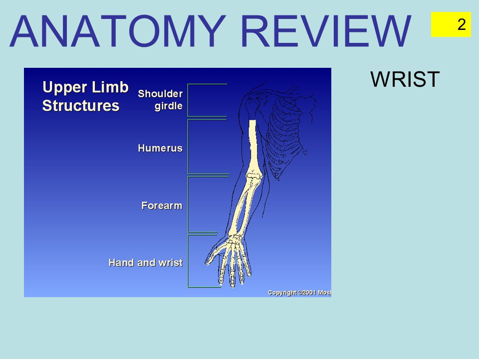 ANATOMY REVIEW WRIST