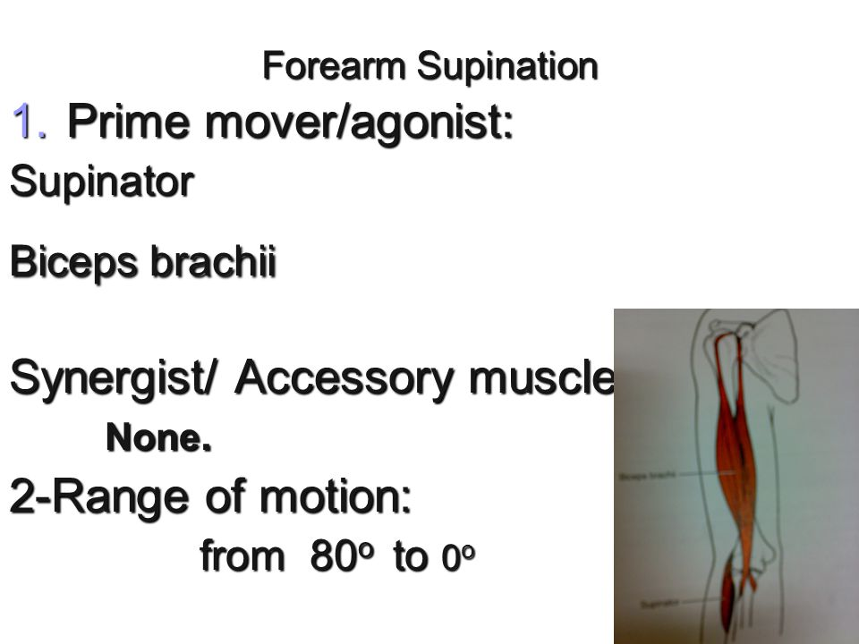 Synergist/ Accessory muscles: 2-Range of motion:
