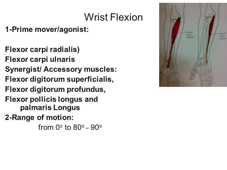 Wrist Flexion 1-Prime mover/agonist: Flexor carpi radialis)