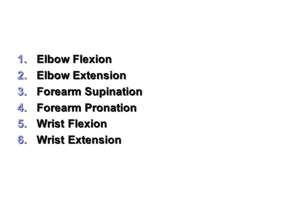 Elbow Flexion Elbow Extension Forearm Supination Forearm Pronation Wrist Flexion Wrist Extension