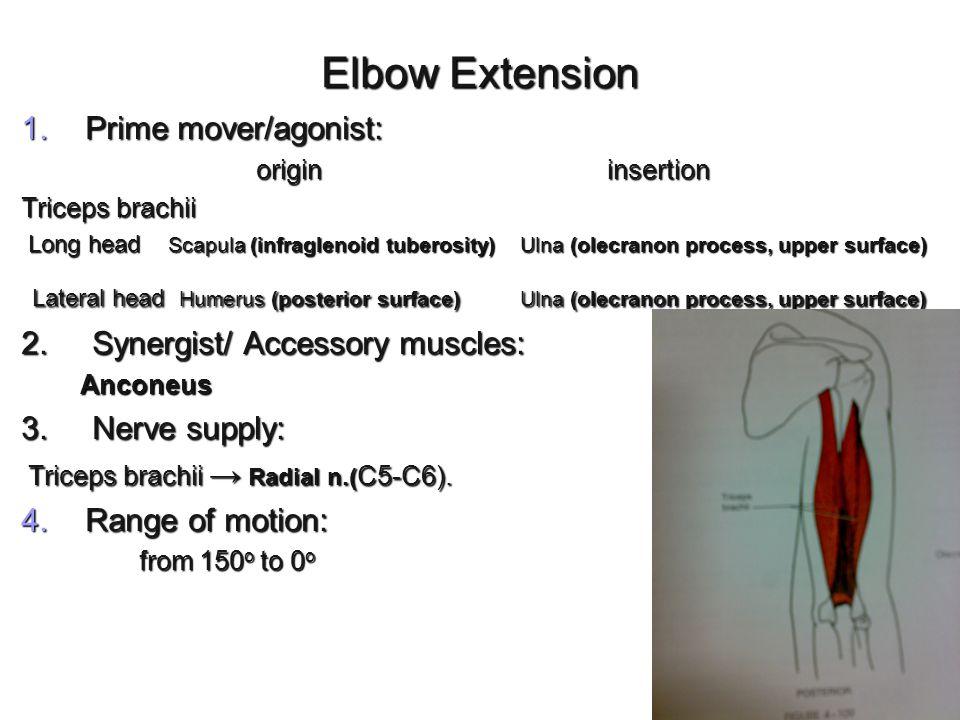 Elbow Extension Prime mover/agonist: origin insertion. Triceps brachii.