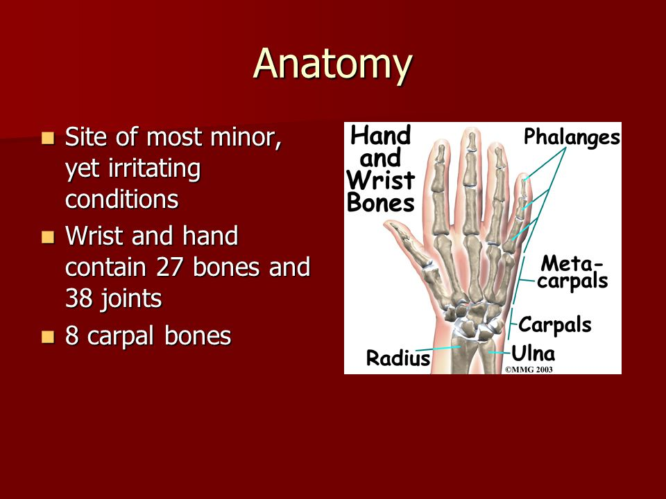 Anatomy Site of most minor, yet irritating conditions