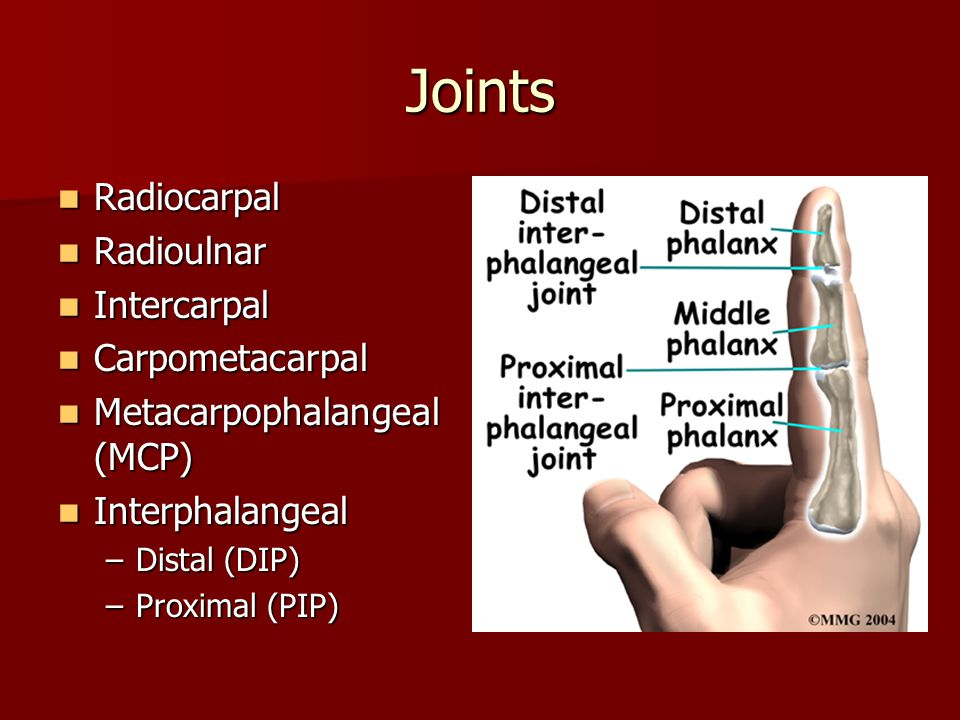 Joints Radiocarpal Radioulnar Intercarpal Carpometacarpal