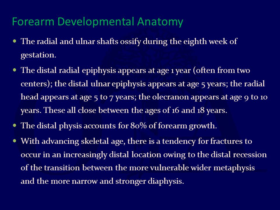 Forearm Developmental Anatomy