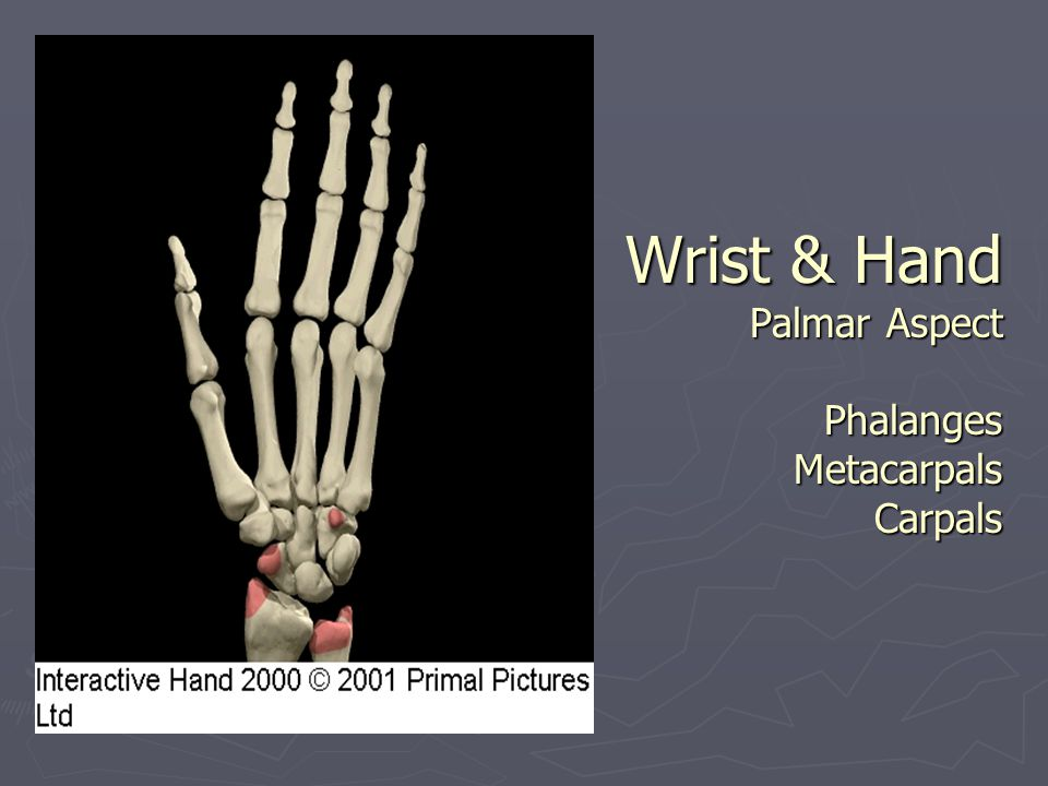 Wrist & Hand Palmar Aspect Phalanges Metacarpals Carpals