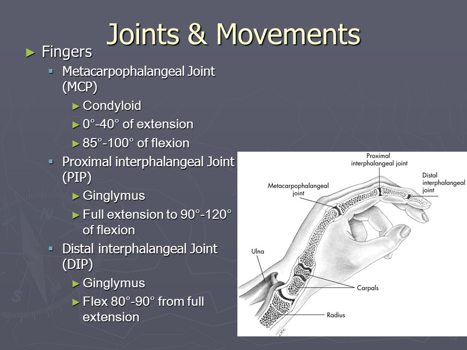 Joints & Movements Fingers Metacarpophalangeal Joint (MCP) Condyloid