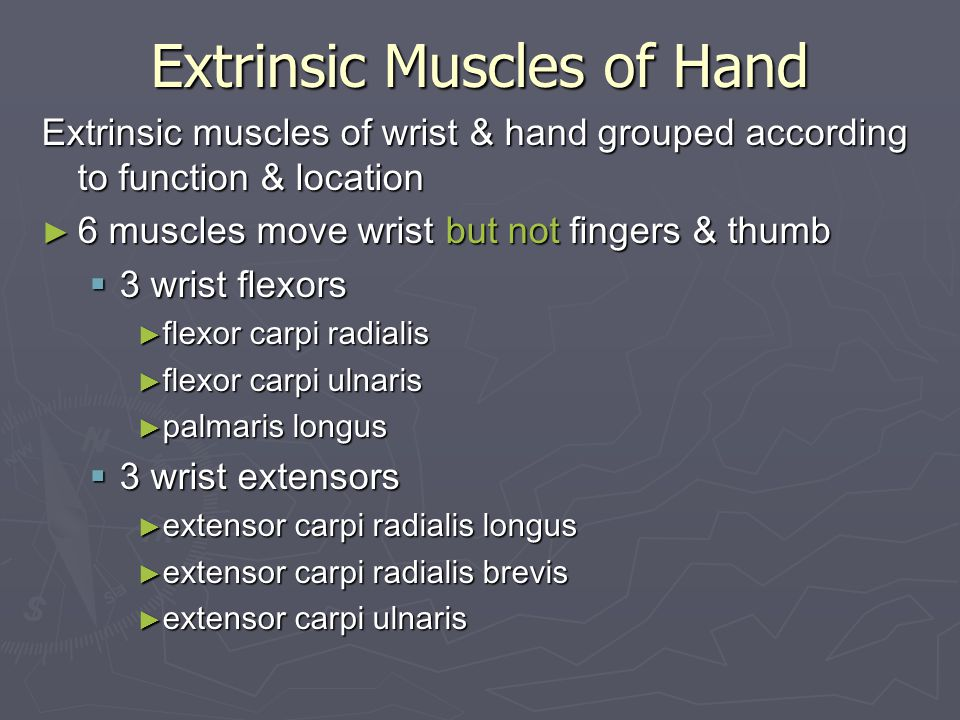 Extrinsic Muscles of Hand