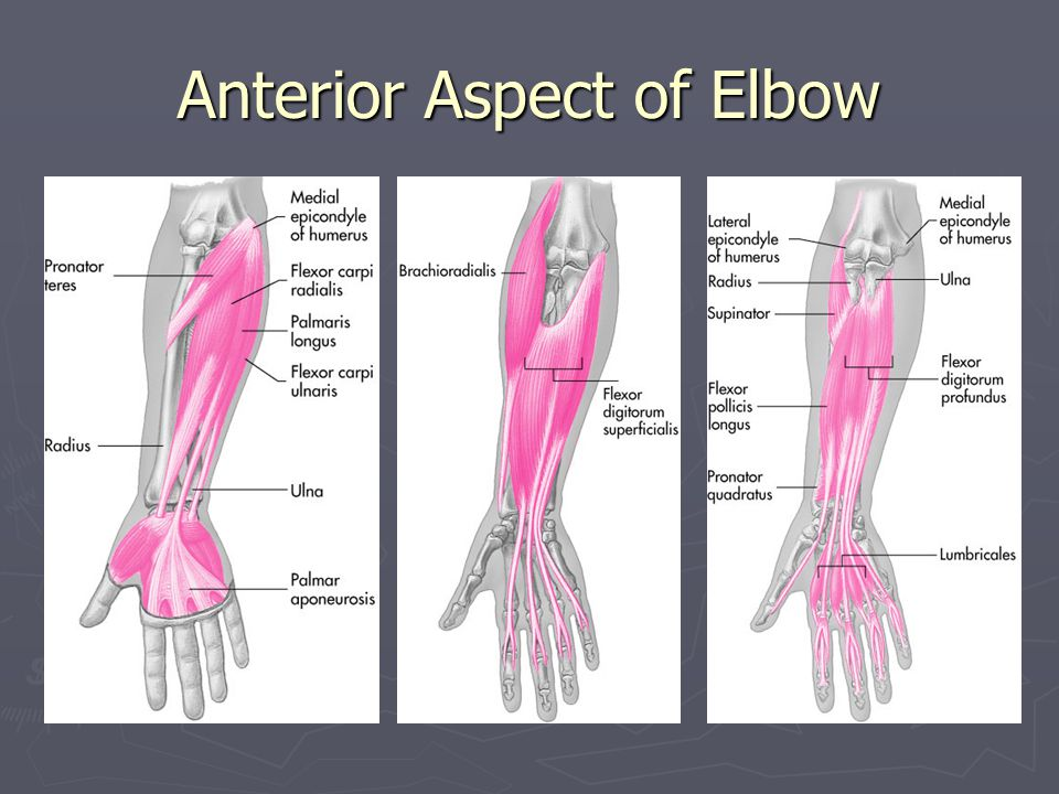 Anterior Aspect of Elbow