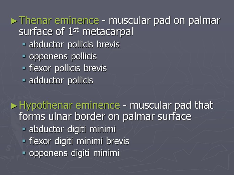 Thenar eminence - muscular pad on palmar surface of 1st metacarpal