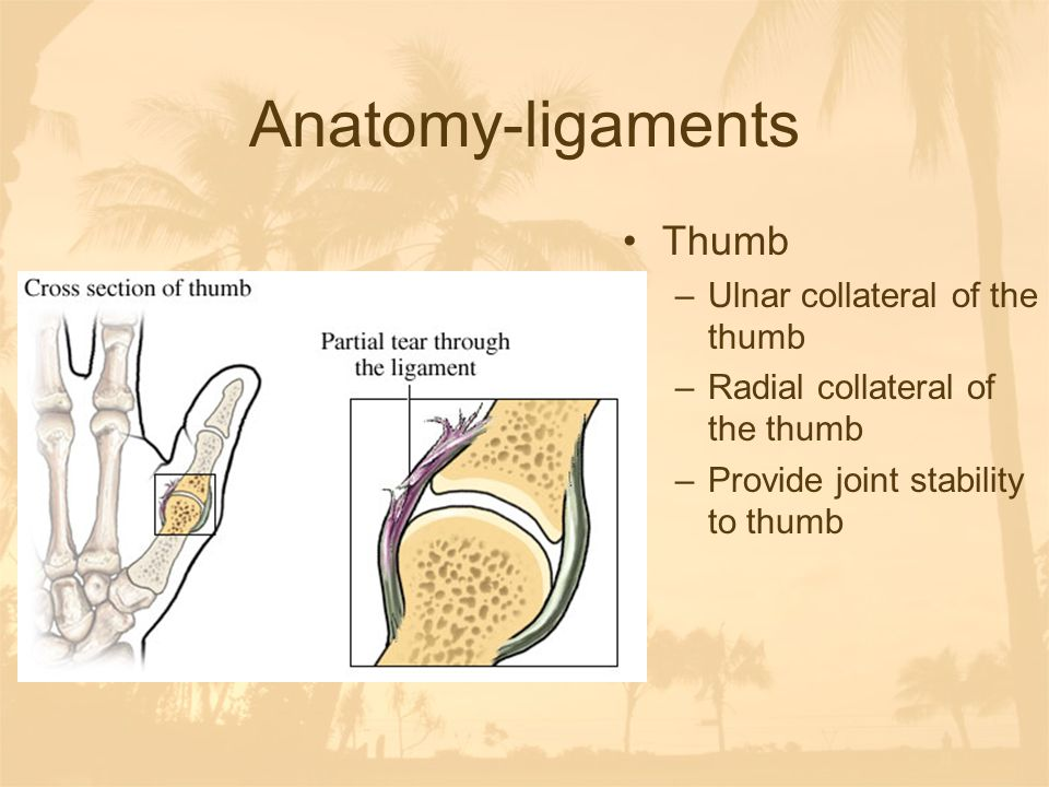 Thumb Collateral Ligament Injury - Hand - Orthobulletscom