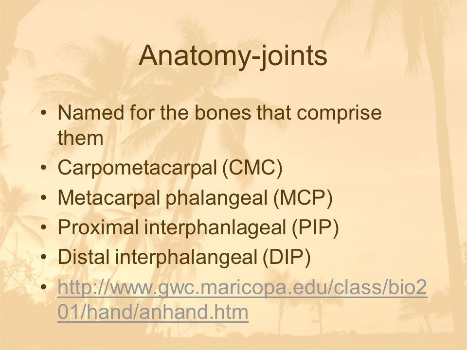 Anatomy-joints Named for the bones that comprise them