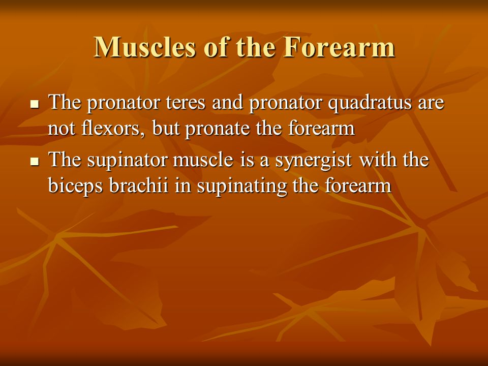Muscles of the Forearm The pronator teres and pronator quadratus are not flexors, but pronate the forearm.