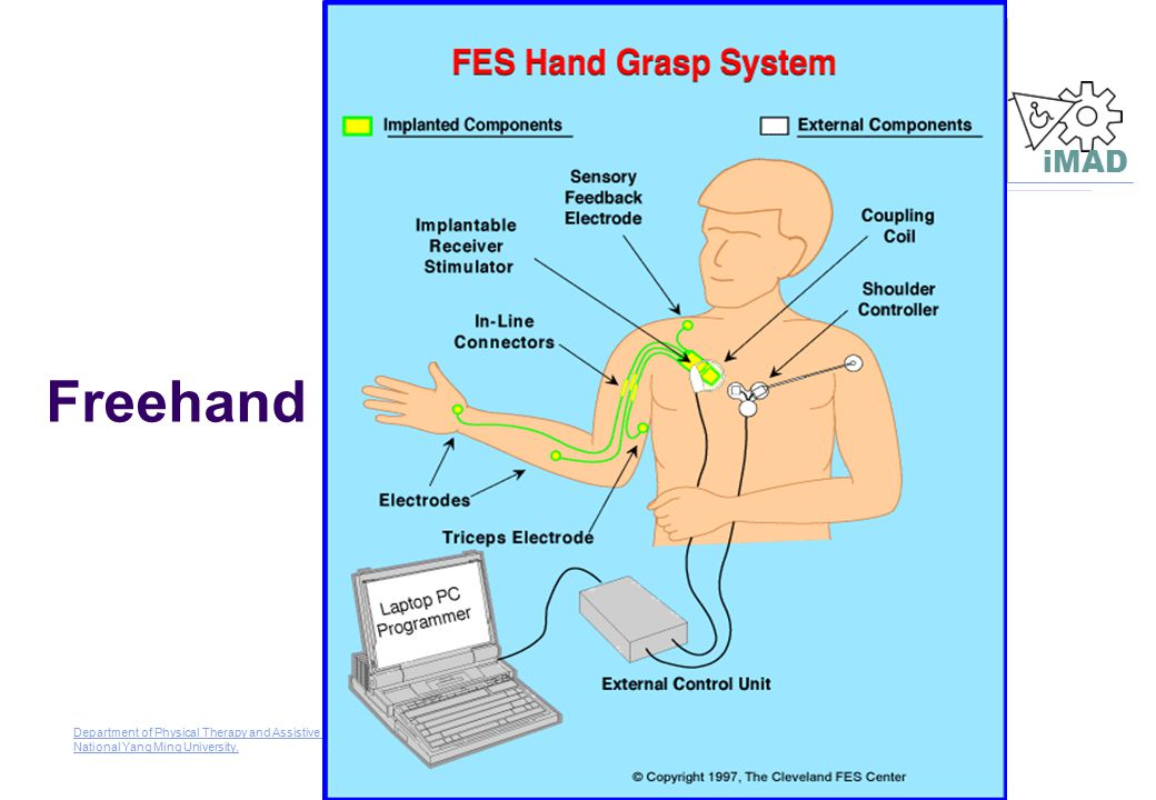 Freehand Department of Physical Therapy and Assistive Technology (Institute of Rehabilitation Science & Technology) , National Yang Ming University.