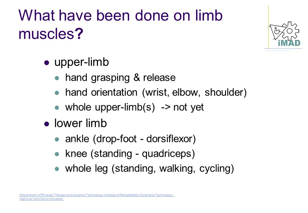 What have been done on limb muscles